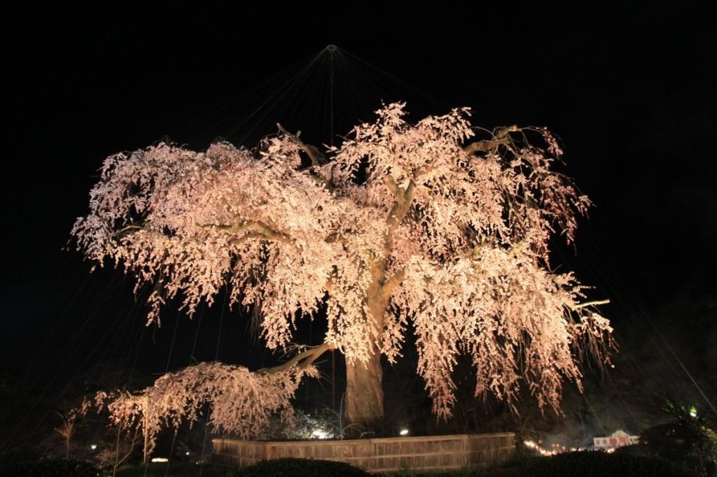 sakura-night-03