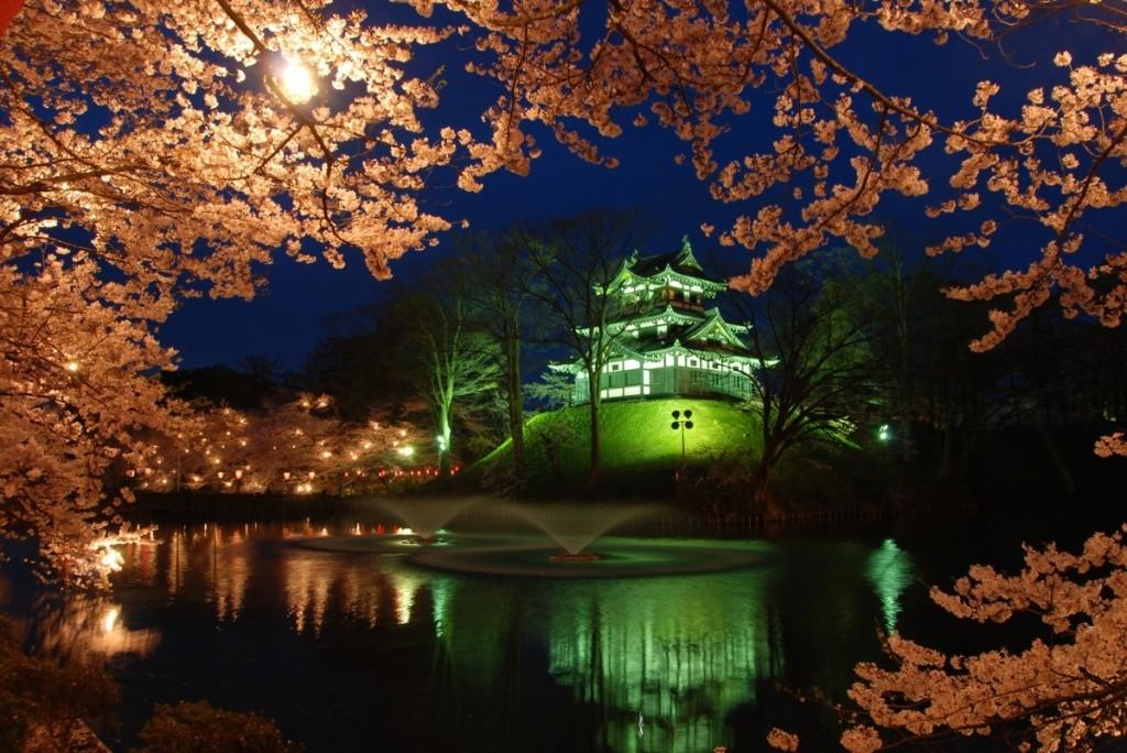 sakura-night-04