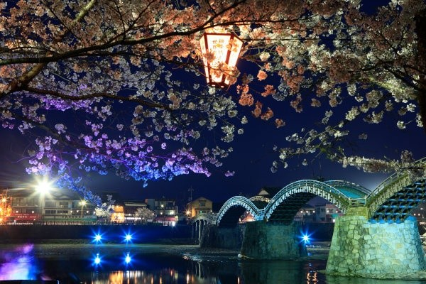 sakura-night-06