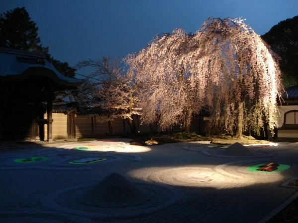 sakura-night-08