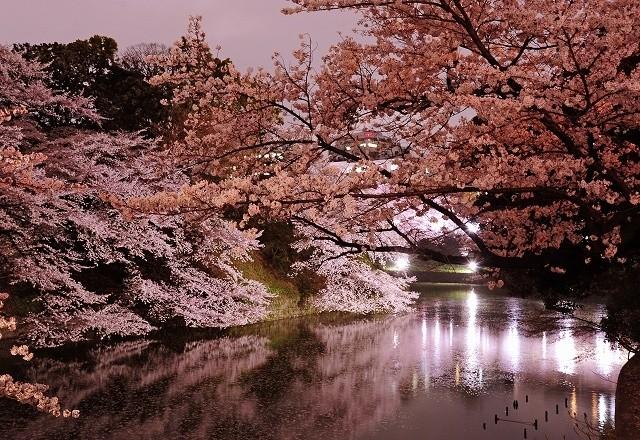 sakura-night-09