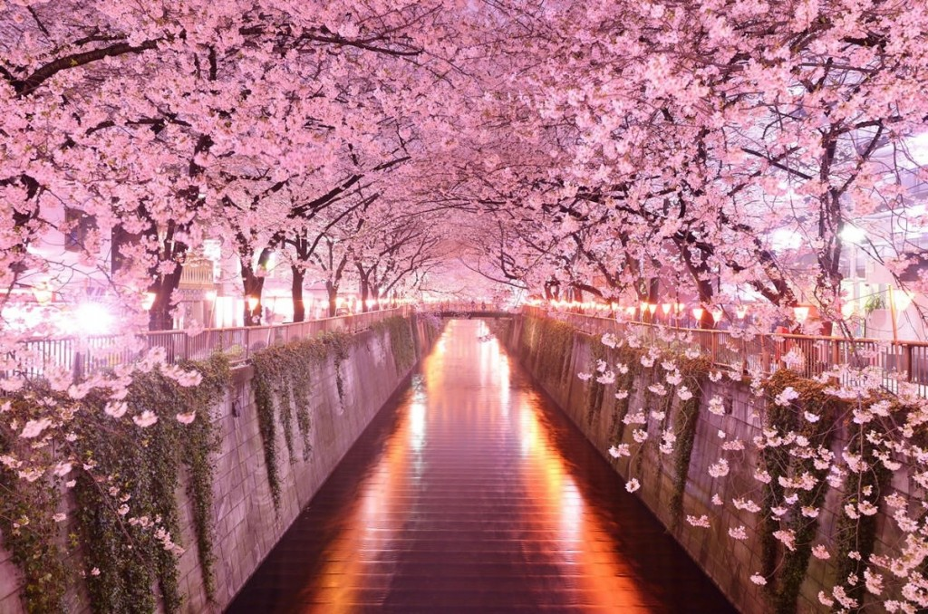 sakura-night-10