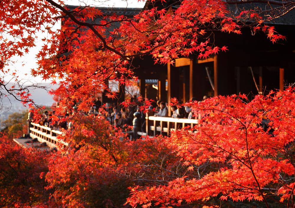 Autumn_Japan 01