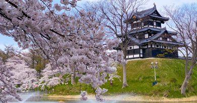 ดูซากุระที่ Takada Castle Site Park (2020)